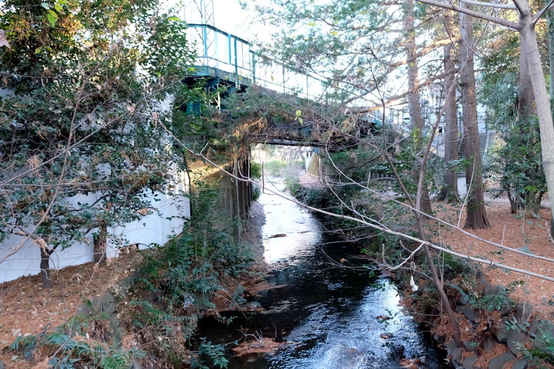 公園を三鷹台方面へ。都内を西から東へ、隅田川まで流れる神田川は、ここ井の頭池を源にしている。